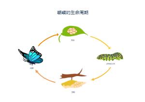 蝴蝶生命周期