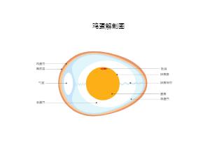 鸡蛋解刨图