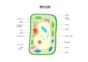 植物细胞图