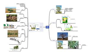 【319】植被与自然地理环境