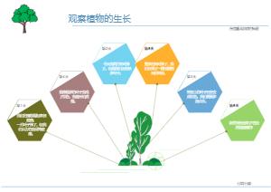 植物生长模板图