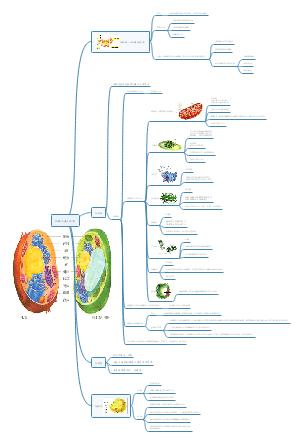 第三章 细胞的基本结构